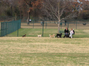 Denton Wiggly Field For Dogs