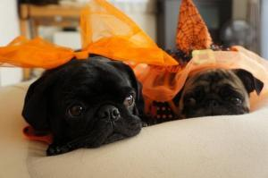 cute dressed up dogs