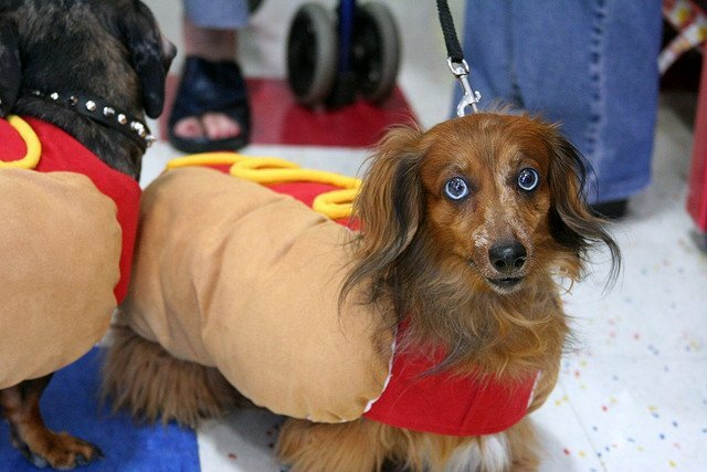 Keeping Your Pets Safe During Halloween