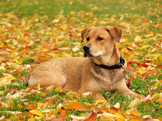 Check Out These Tips on Keeping Pets Safe During Thanksgiving – DFW Pet Sitting