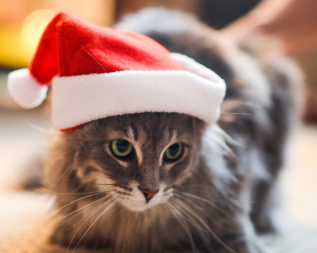 Pet Proofing Your Home For The Holidays – DFW Pet Sitting