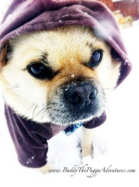 Pet care tips in Dallas Fort Worth colder temperatures as the arctic front reaches us this week – DFW Pet Sitting