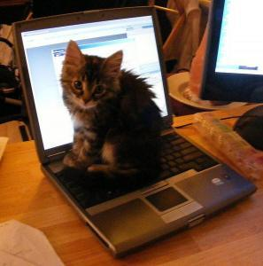 kitten working hard at a computer