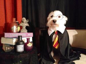 funny dogs dressing up