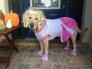 cute pets dressing up for Halloween