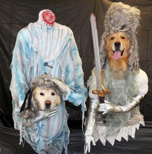 funny pets Halloween