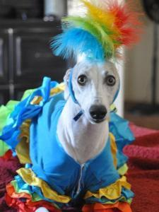 pets dressing up for Halloween celebrations