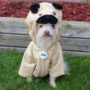 pets dressing up on Halloween