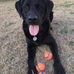 dog with tennis balls