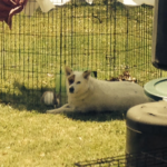 dog laying outside