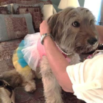 dressing up my dog
