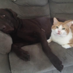 dog and cat on a couch