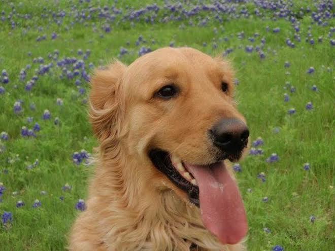 Dog Walking Services Fort Worth