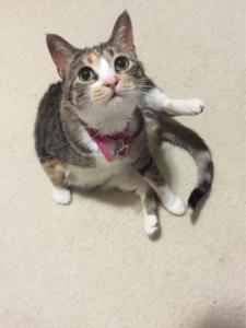 Addison pet sitting