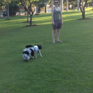 pet sitters in Addison