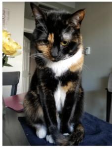 cat sitting in dallas