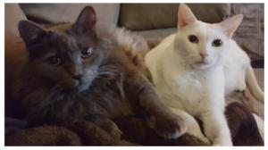 pet sitters in dallas