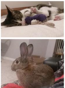 rabbit sitting in dallas
