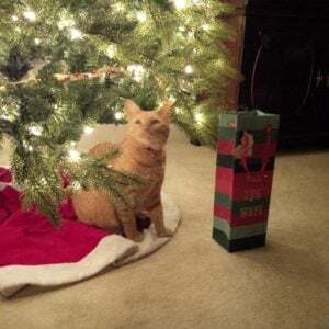 holiday cat picture
