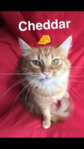 pet sitting a cat