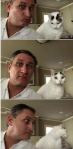 pet sitting cats