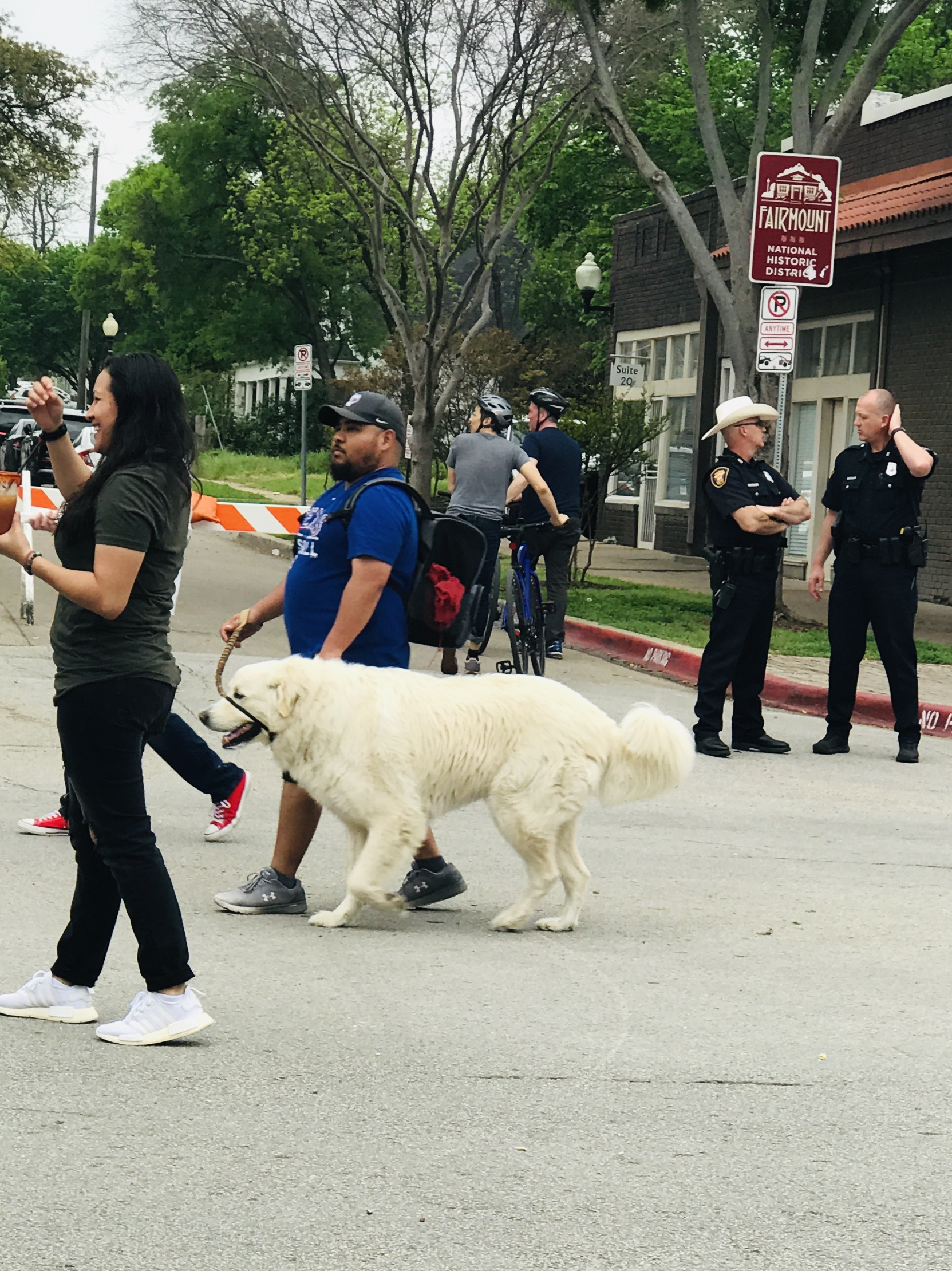 Open Streets for Dog Walkers in Fort Worth | DFW Pet Sitting