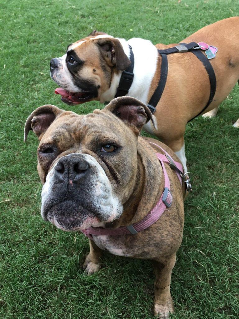 Pet sitter from Garland shares her neighborhood pet-related activities