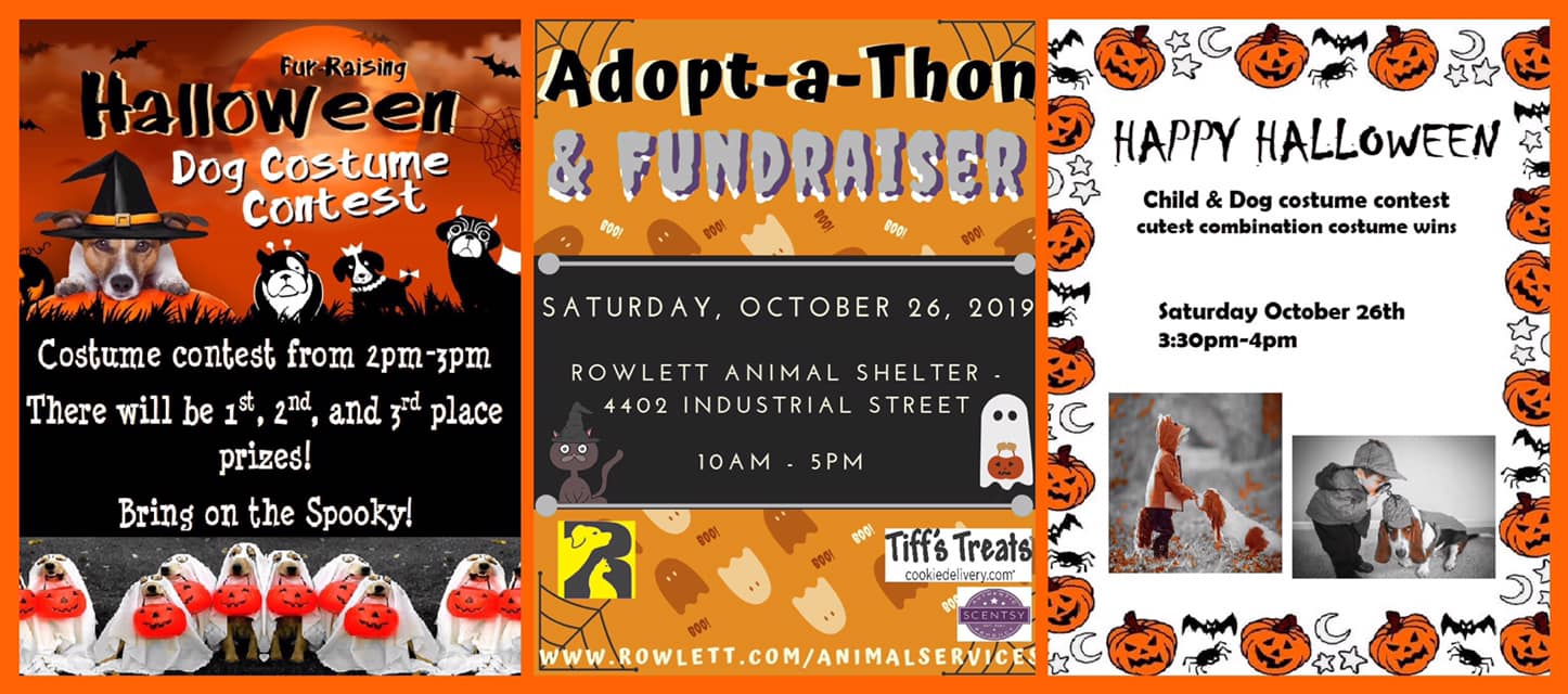 Adopt-A-Thon At The Rowlett Animal Shelter
