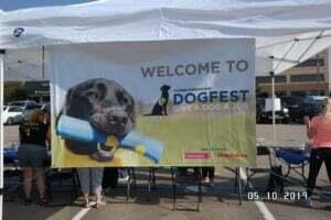 pets at dog fest